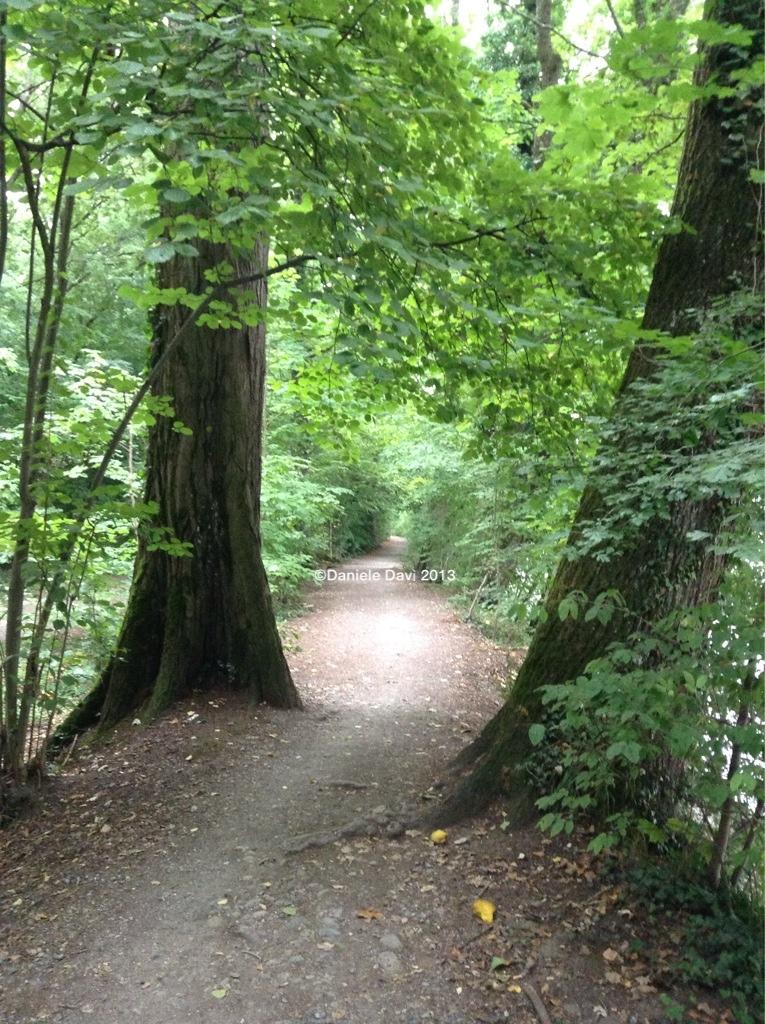 L'estate, il bosco, la pioggia.