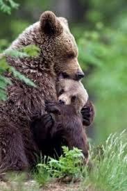 Abbraccio Orsi